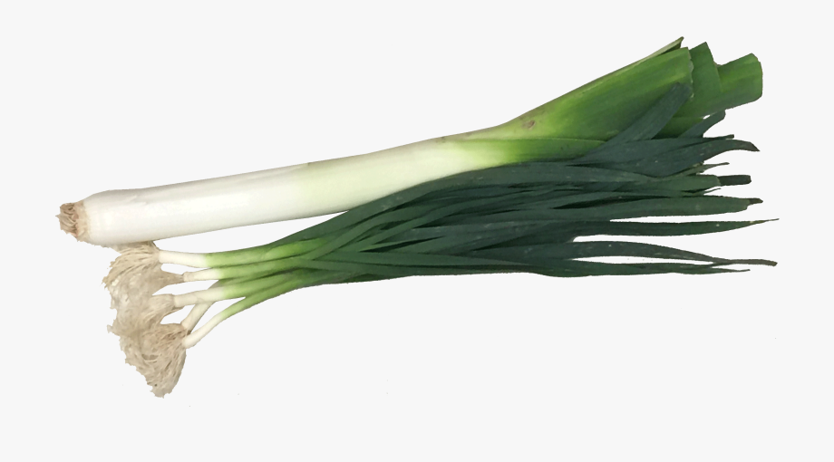 Vegetable Leek Png Clipart Background.