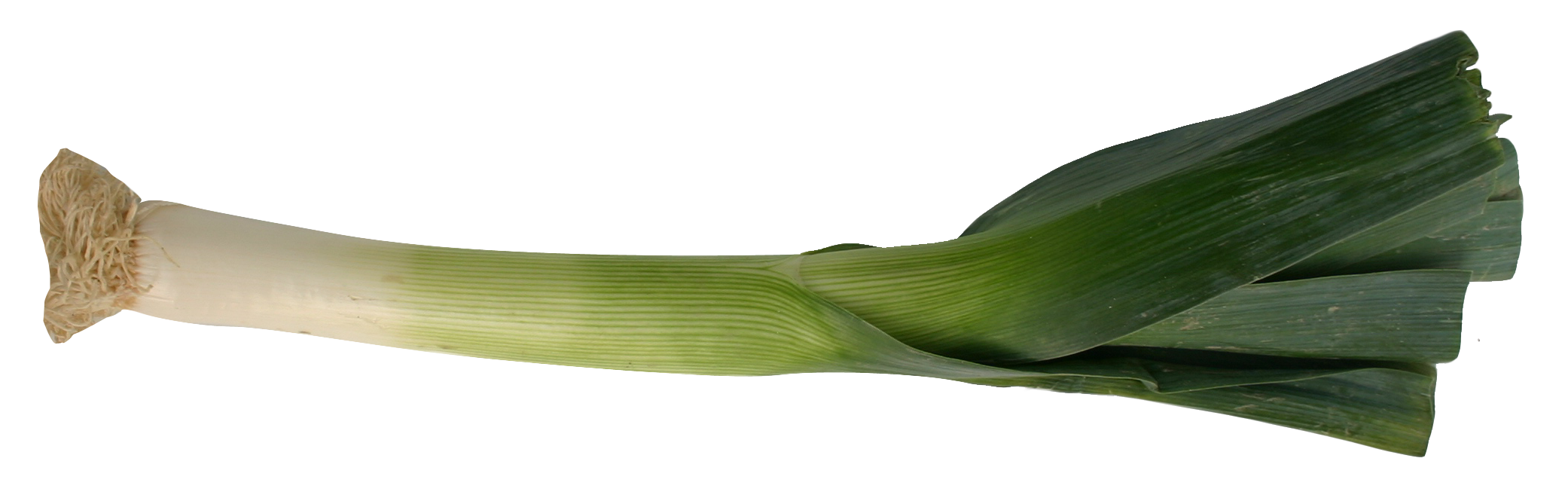 Leek PNG Image.