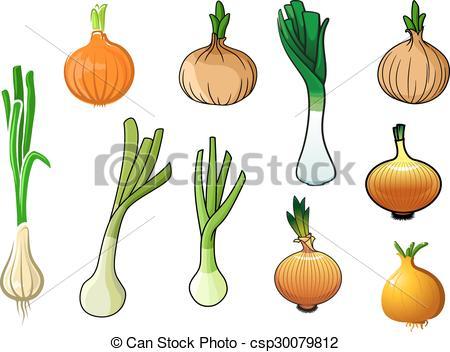 Vector Clip Art of Onion bulbs and leek vegetables.