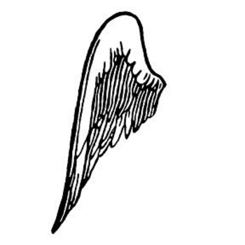 Clipart Picture of Left Side Wing.