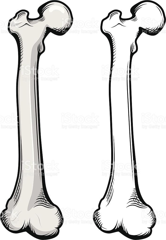 Leg Bone Clip Art Vector Images & Illustrations IStock.