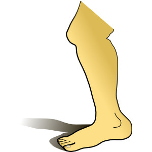 Leg clipart free clipart images image #30805.
