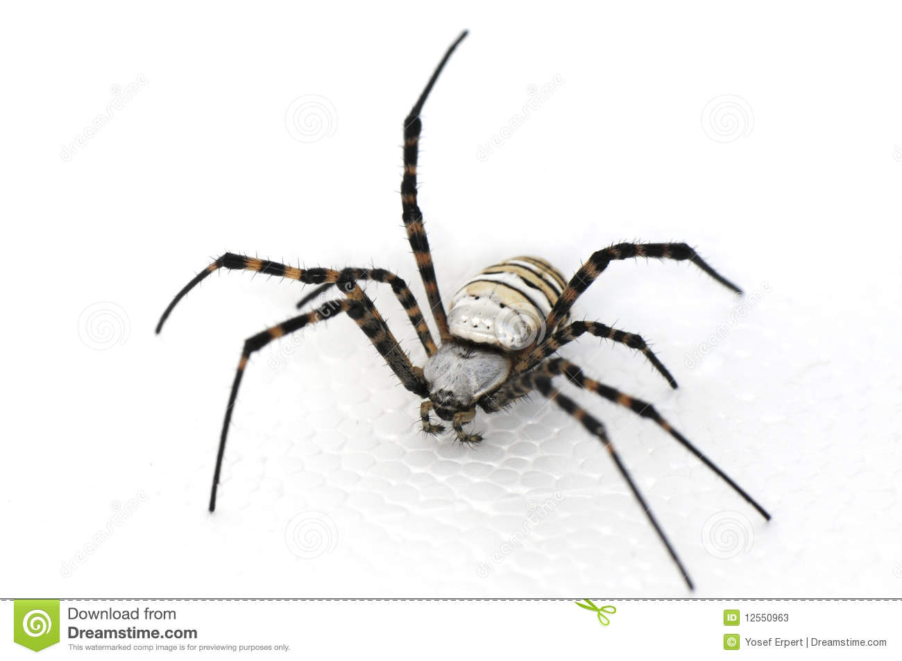 Spider Hairy That Have Eight Legs On White Background #mPxGcR.