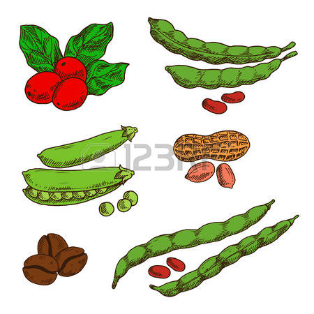 2,149 Legume Cliparts, Stock Vector And Royalty Free Legume.