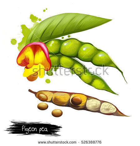 Legume Family Stock Images, Royalty.