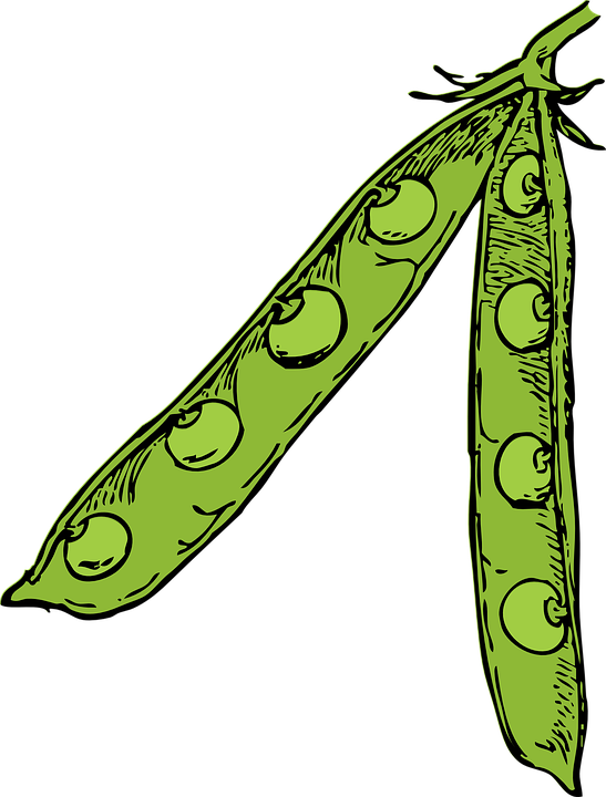 Free vector graphic: Peas, Legumes, Leguminous Plants.