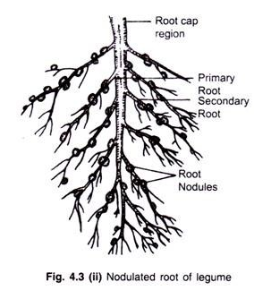 Roots in Angiospermic Plants: Function, Modification and Anatomy.