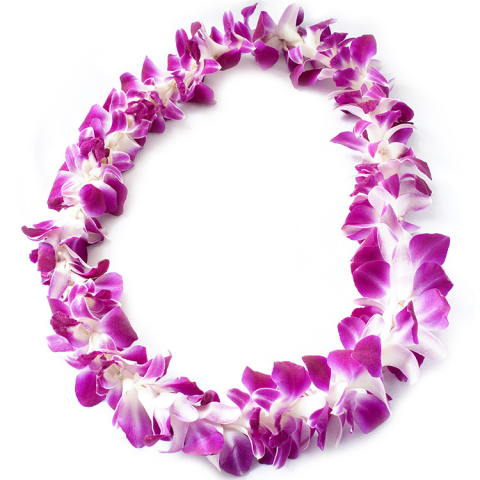 Lei Png (101+ images in Collection) Page 2.