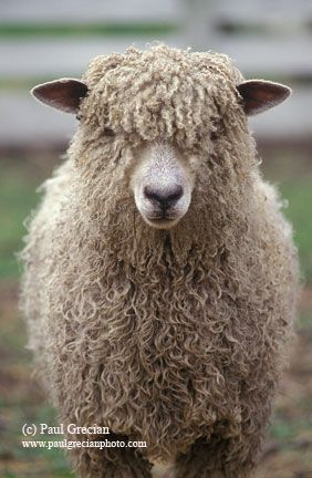 1000+ images about Sheep Stuff on Pinterest.