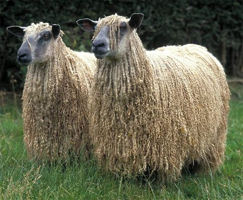 1000+ images about Sheep! on Pinterest.
