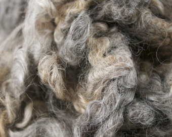 Leicester longwool.