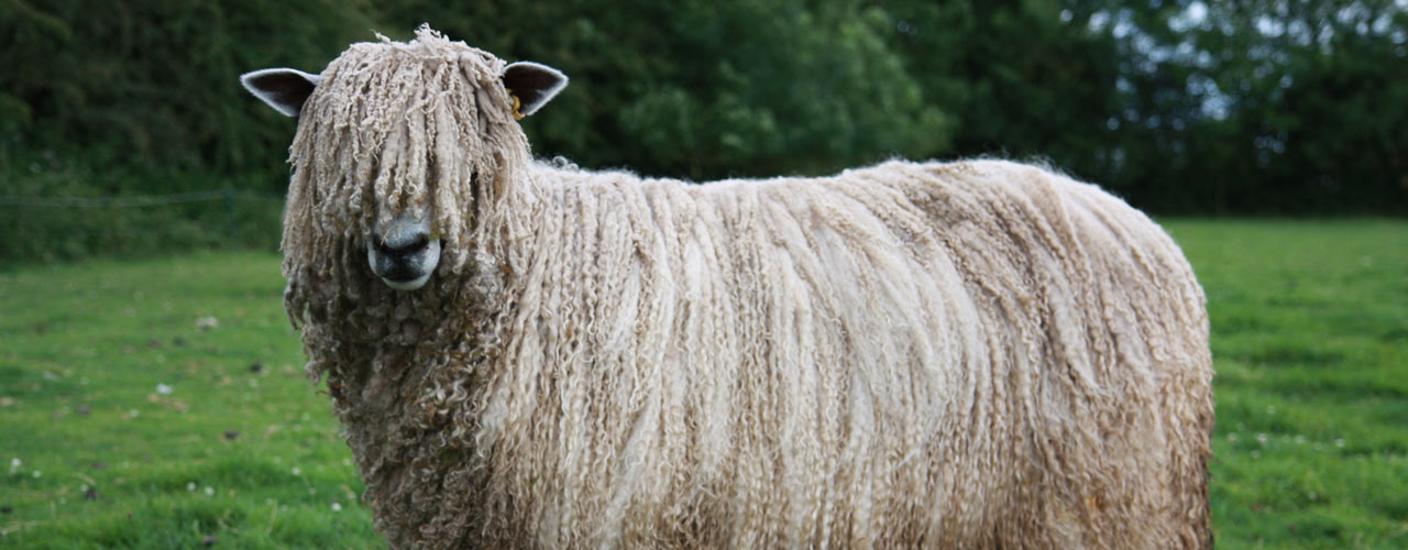 Leicester Longwool Sheep Breeders Association.