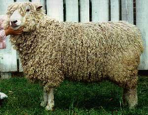 Breeds of Livestock.