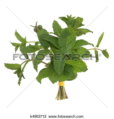 Stock Photo of Lemon Balm Herb Posy k4953712.
