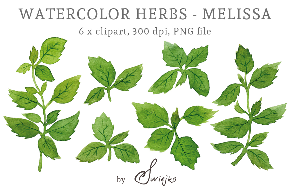 Herbs Clipart, Watercolor Leaves, Melissa, Lemon Balm by swiejko.