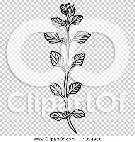 Clipart of a Black and White Woodcut Herbal Medicinal Lemon Balm.