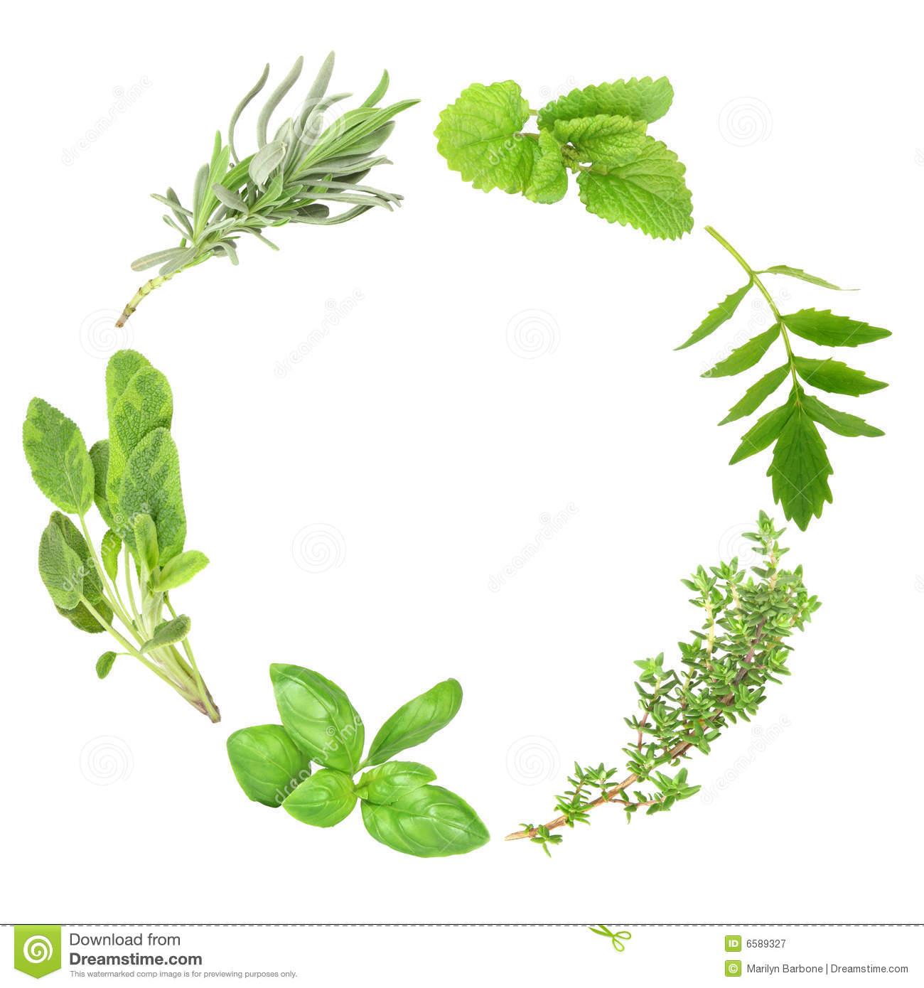 Herb Leaf Garland Of Basil Variegated Sage Lavender Lemon Balm.