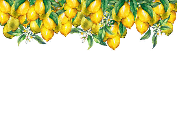 Best Lemon Or Lime Border Illustrations, Royalty.