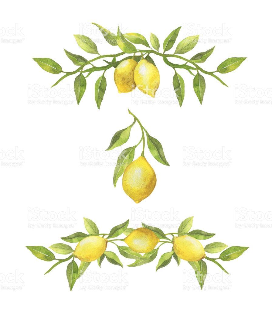 Watercolor lemons and green leaves borders. Botanical.
