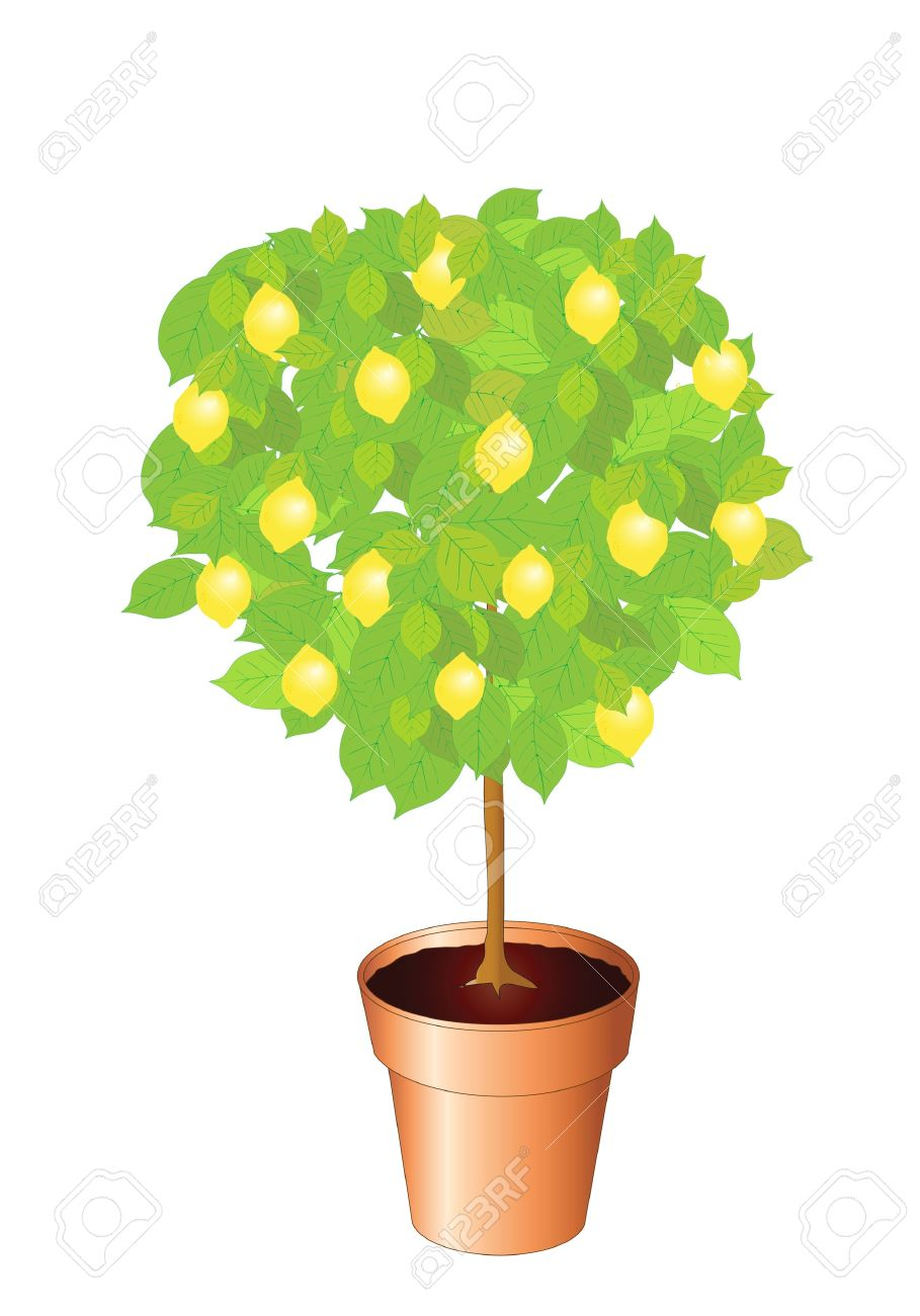 Lemon Bush Clipart Clipground