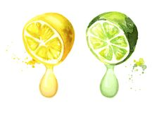 Lemon Drop Stock Illustrations.