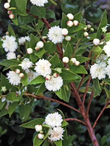 1000+ images about Trees and Shrubs on Pinterest.