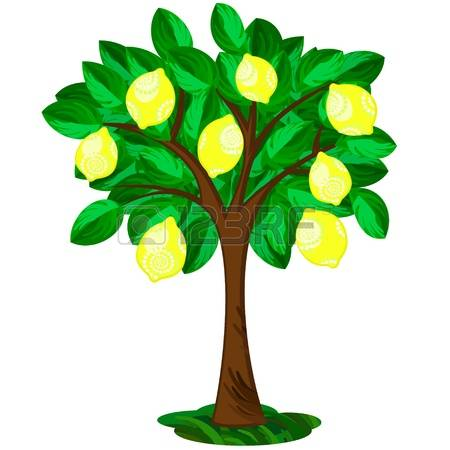 2,062 Lemon Tree Stock Illustrations, Cliparts And Royalty Free.