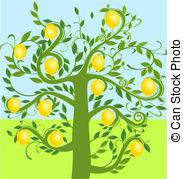 Lemon tree Illustrations and Clipart. 967 Lemon tree royalty free.