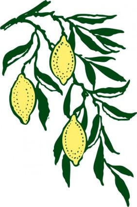 23 lemon tree clipart..