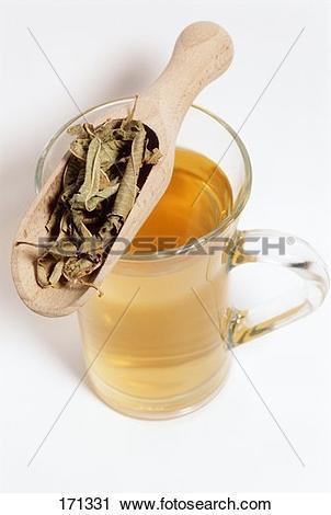 Stock Photography of Lemon verbena tea (Lippia citriodera) 171331.