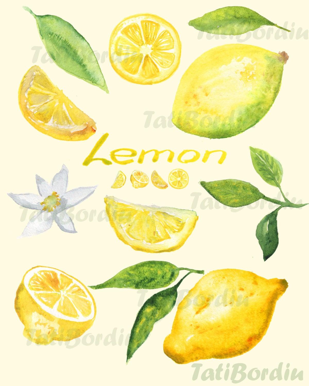 Lemon Watercolor Clip Art (clipart).