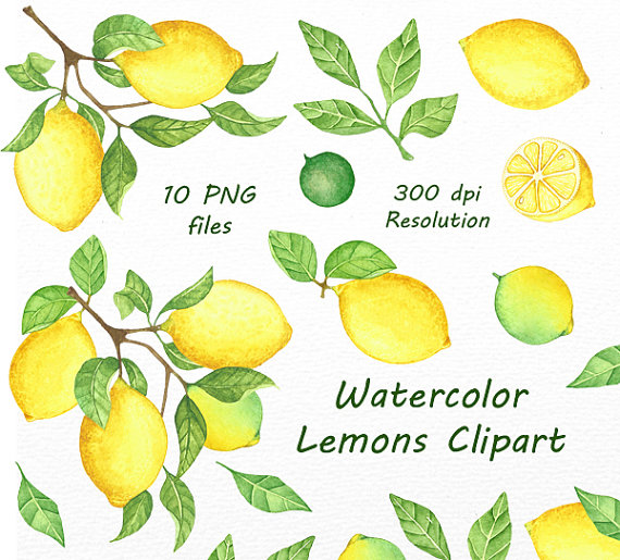 Watercolor Lemons Clipart, Lemon Watercolor clip art. Hand.