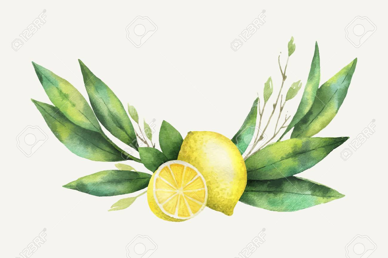 Watercolor vector hand drawn wreath with lemon and leaves..