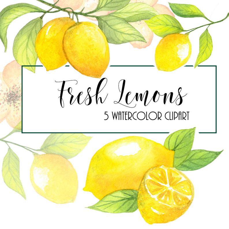 Lemon Watercolor Clipart. Hand painting fruit. Digital png & jpeg. Food  wall art. Kitchen. Scrapbooking. Wedding DIY invites.