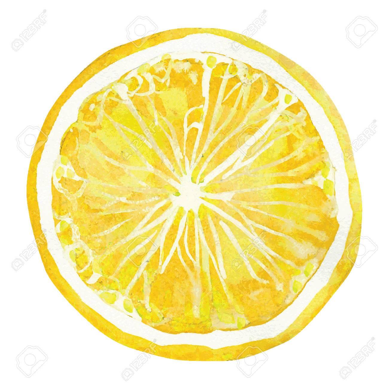slice of lemon, watercolor vector illustration.