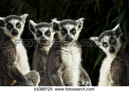Stock Image of group of Ring.