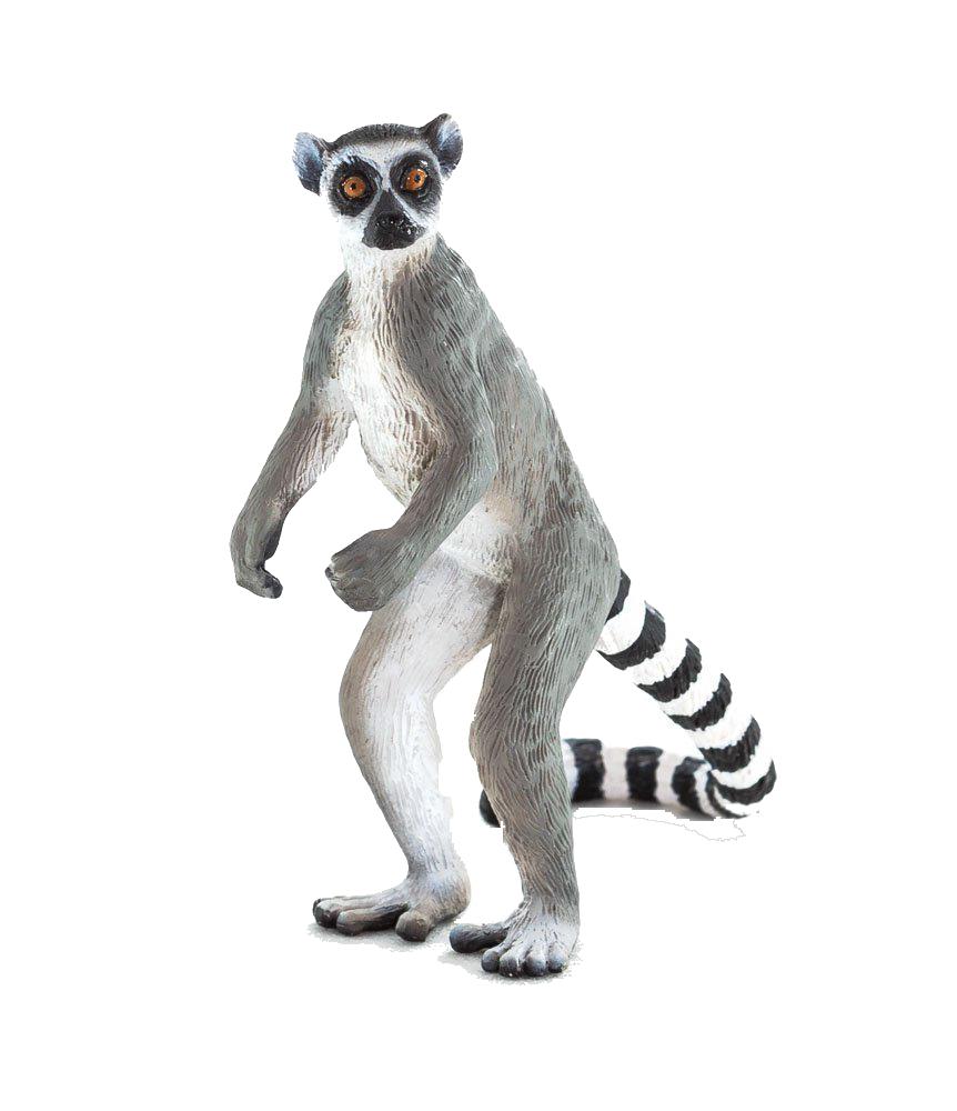 Lemur Png & Free Lemur.png Transparent Images #29957.