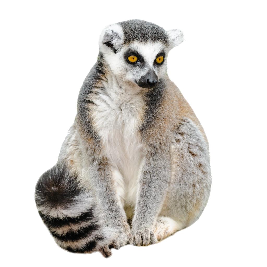 Lemur PNG Free Pic.