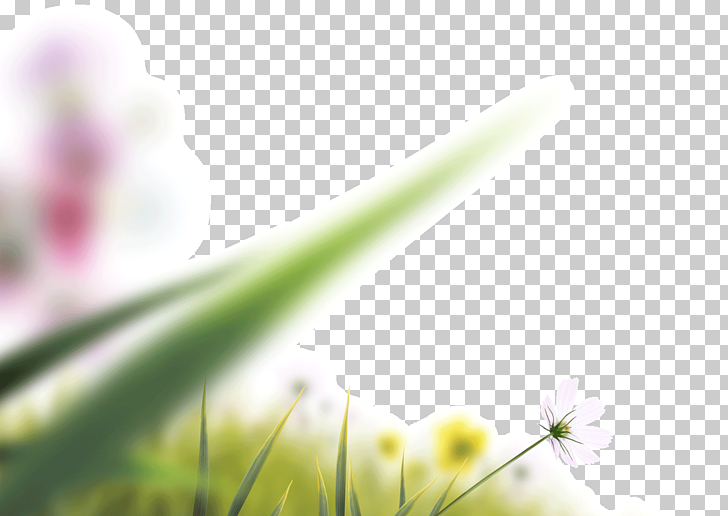 Camera lens Icon, Lens blur blurred leaves blooming flowers.