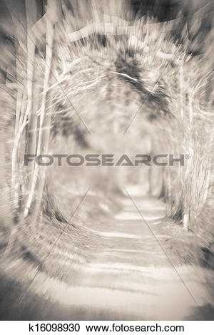 Stock Photography of Creepy forest entrance with hypnotic lensbaby.