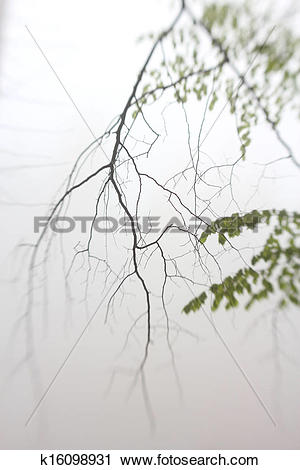 Stock Photography of Single twig in forest mist with lensbaby.