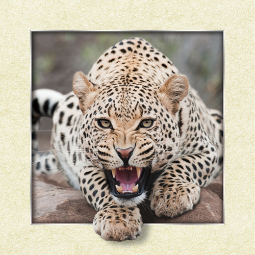 Aliexpress.com : Buy Leopard Panther Lenticular 3D Picture Insect.