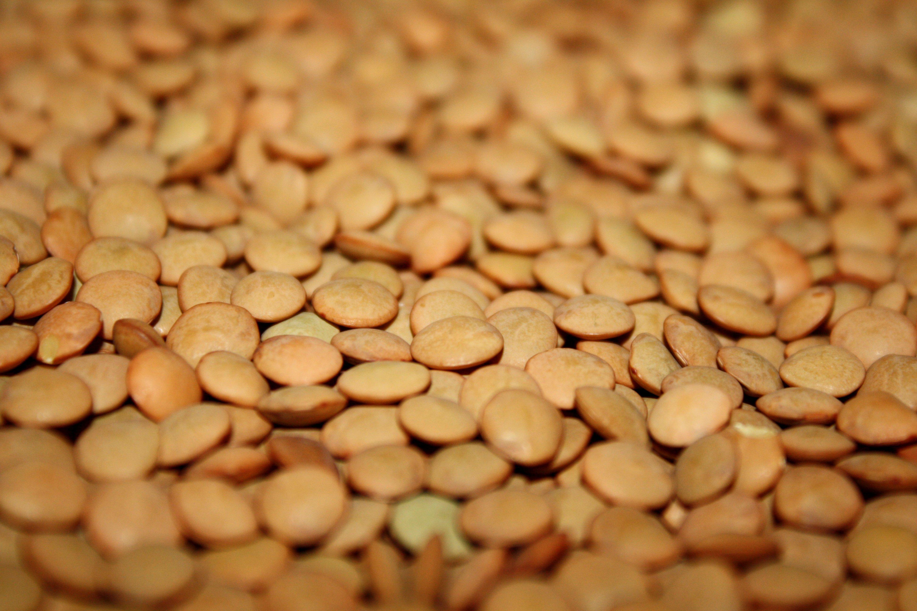 Lentils Picture.