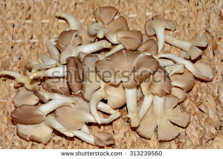 Mushroom Kit Stock Photos, Royalty.