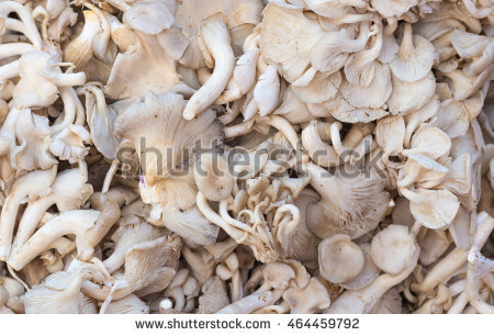 Mushroom Stock Photos, Royalty.