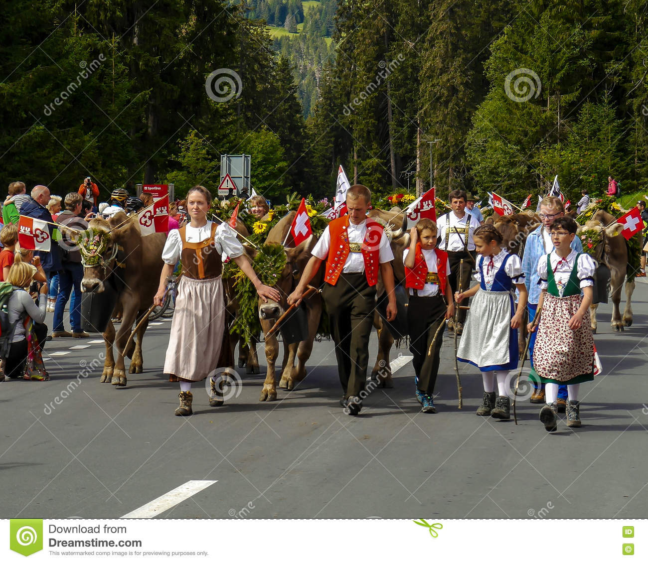 Traditional Swiss Cow Parade (Alpabzug) In Swuitzerland Editorial.
