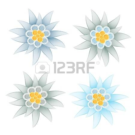 219 Edelweiss Stock Illustrations, Cliparts And Royalty Free.