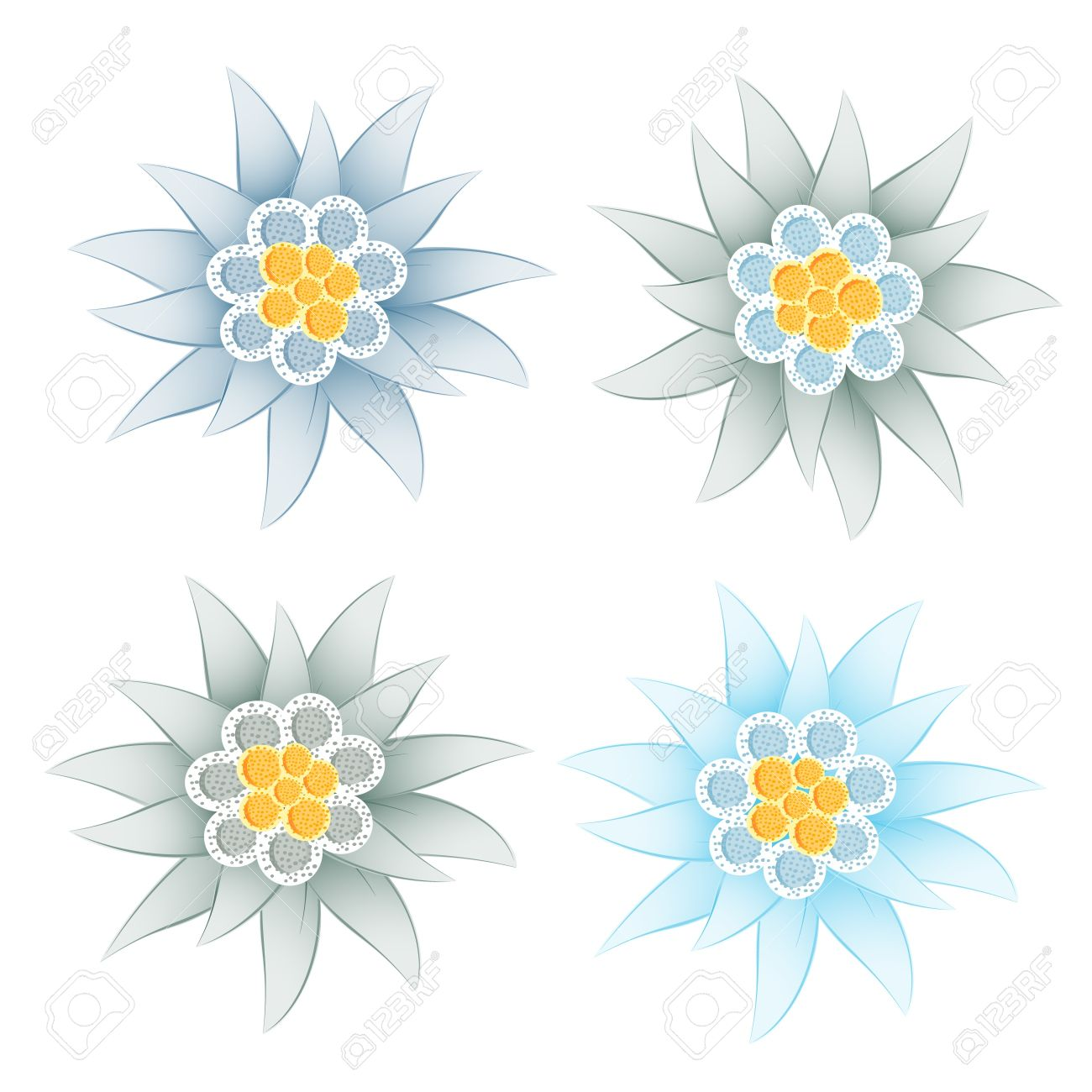 Edelweiss (Leontopodium Alpinum) Royalty Free Cliparts, Vectors.