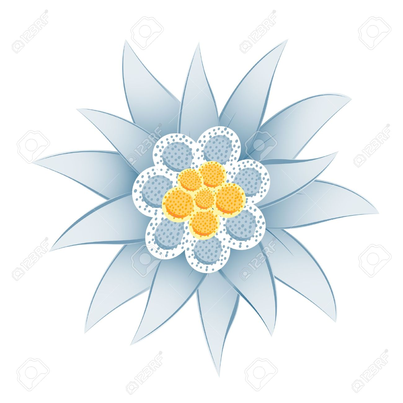 Edelweiss Leontopodium Alpinum Royalty Free Cliparts, Vectors, And.