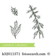 Leonurus Clip Art Royalty Free. 9 leonurus clipart vector EPS.